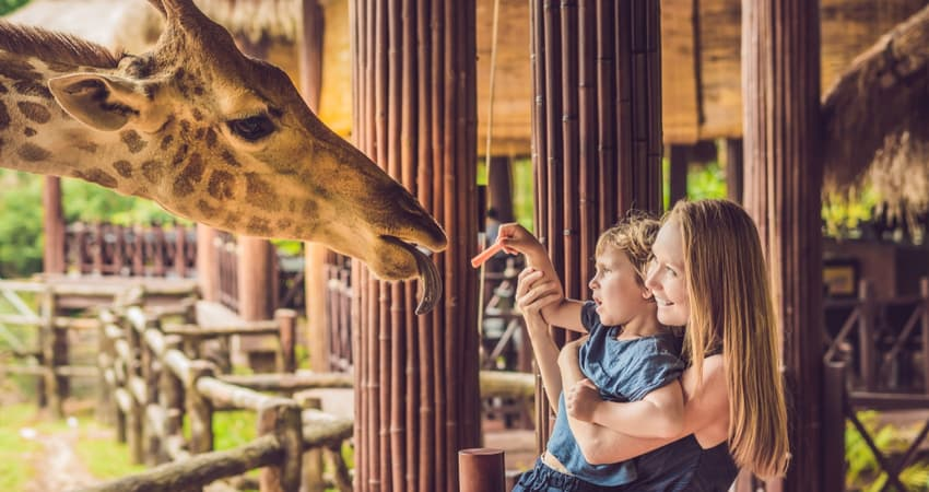 mother and child feeding giraffe at a zoo