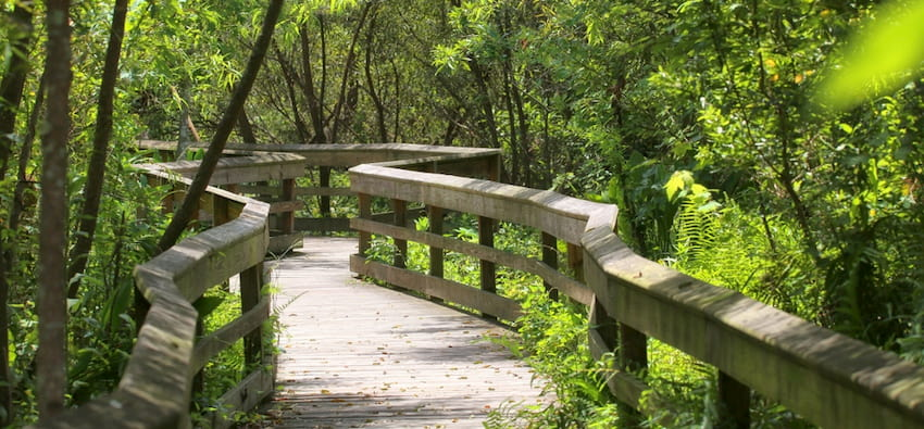 the boardwalk walking trail extends into wooded marshland at Mead Botanical Garden near Orlando Florida