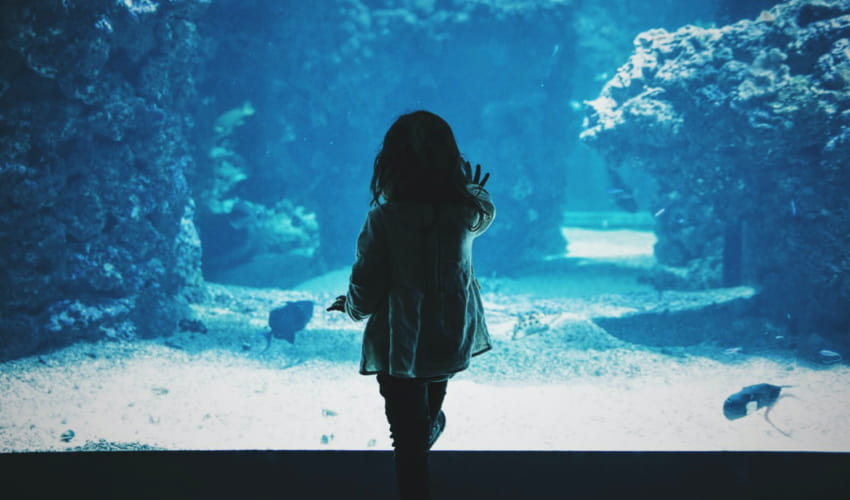 a child presses her hand to the glass of a large aquarium wall