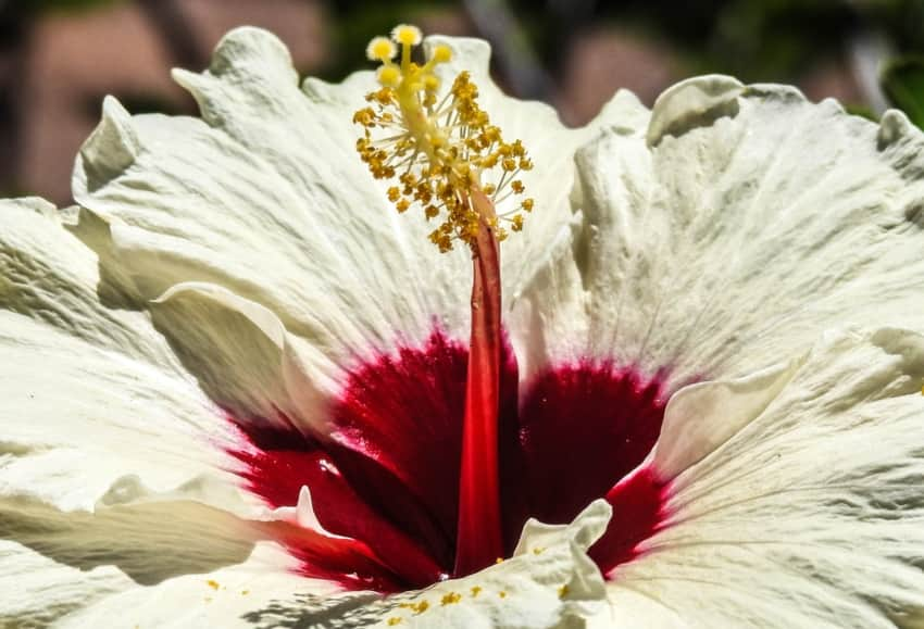 Close up of a flower at the Florida Botanical Gardens