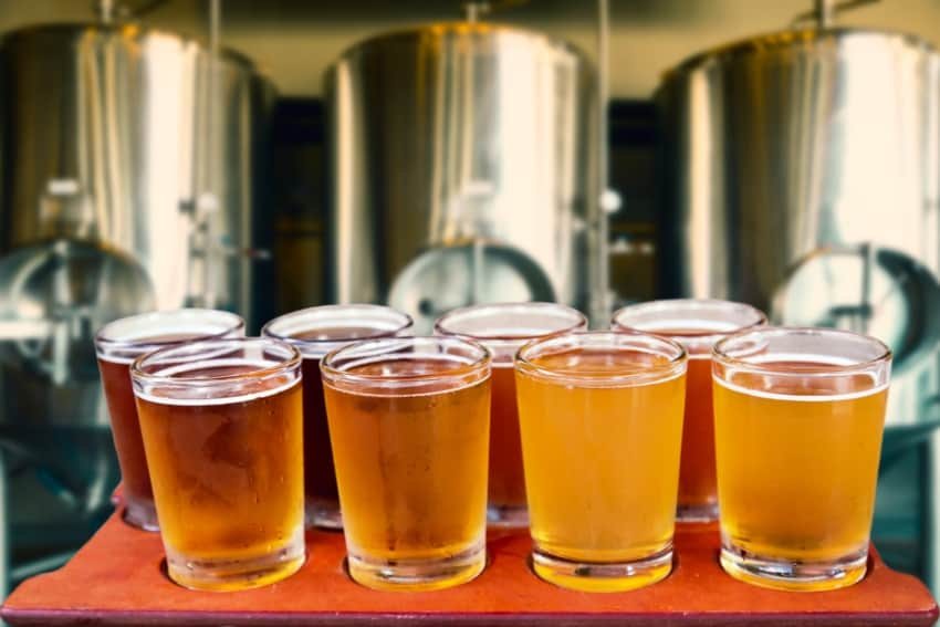 Several glasses of fresh craft beer placed in a row