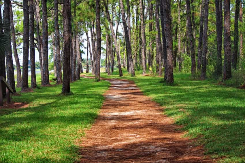 Hiking trail surrounded by trees