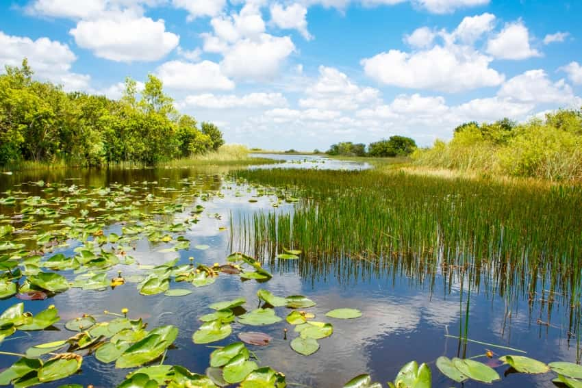 A view of the Florida Everglades