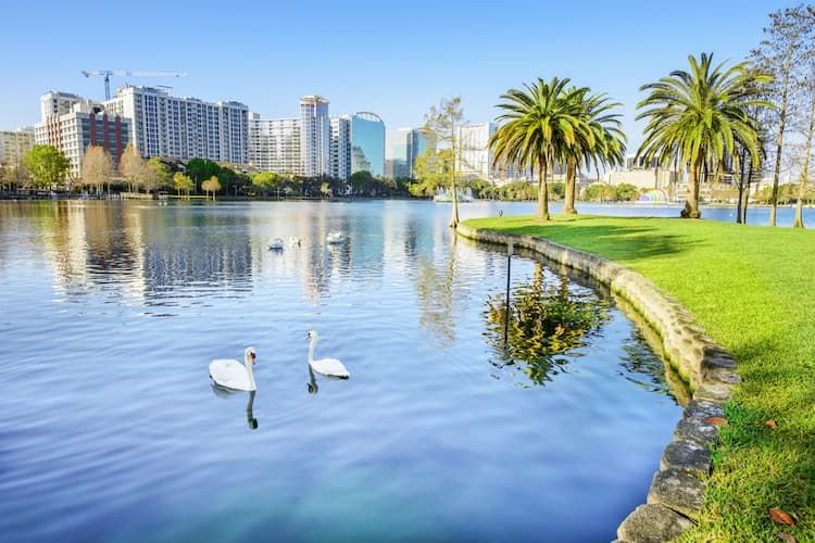 Swans on Lake Eola