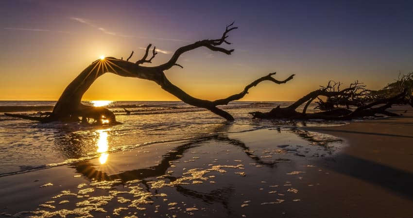The sun rises over a driftwood tree on Jekyll Island