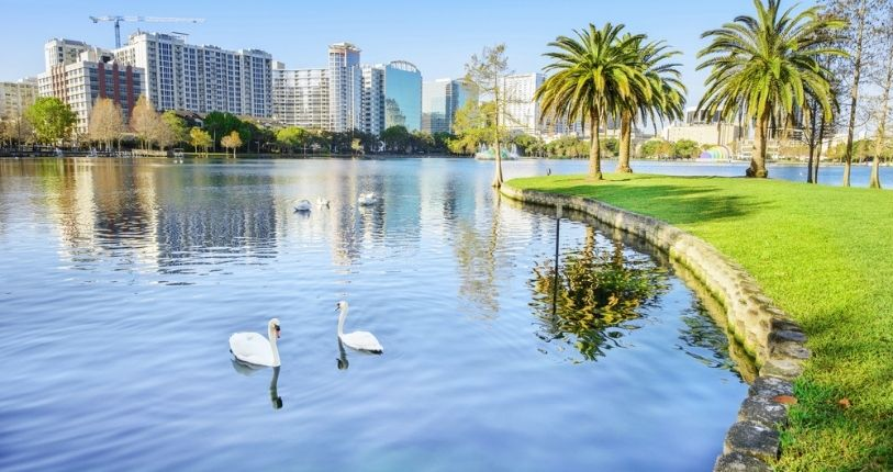 Swans swimming on a lake with Orlando in the background