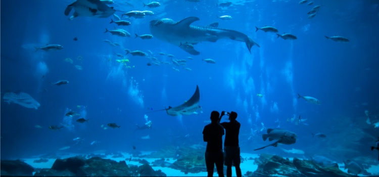image of people looking at animals in an aquarium